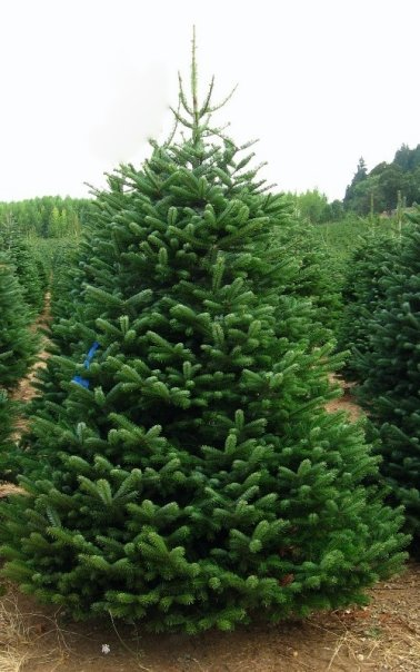 Christmas Tree Market Coupons